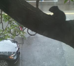 baby_black_squirrel