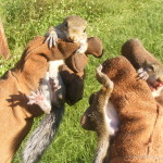 humane-squirrel-removal