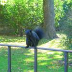 toronto-squirrel